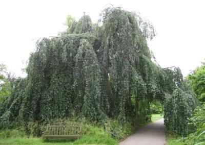arbre (10)