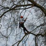 Nouvelle formation d'Arboriste-Grimpeur