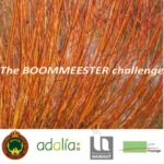 The BOOMMEESTER challenge  – willow cuttings for the climate