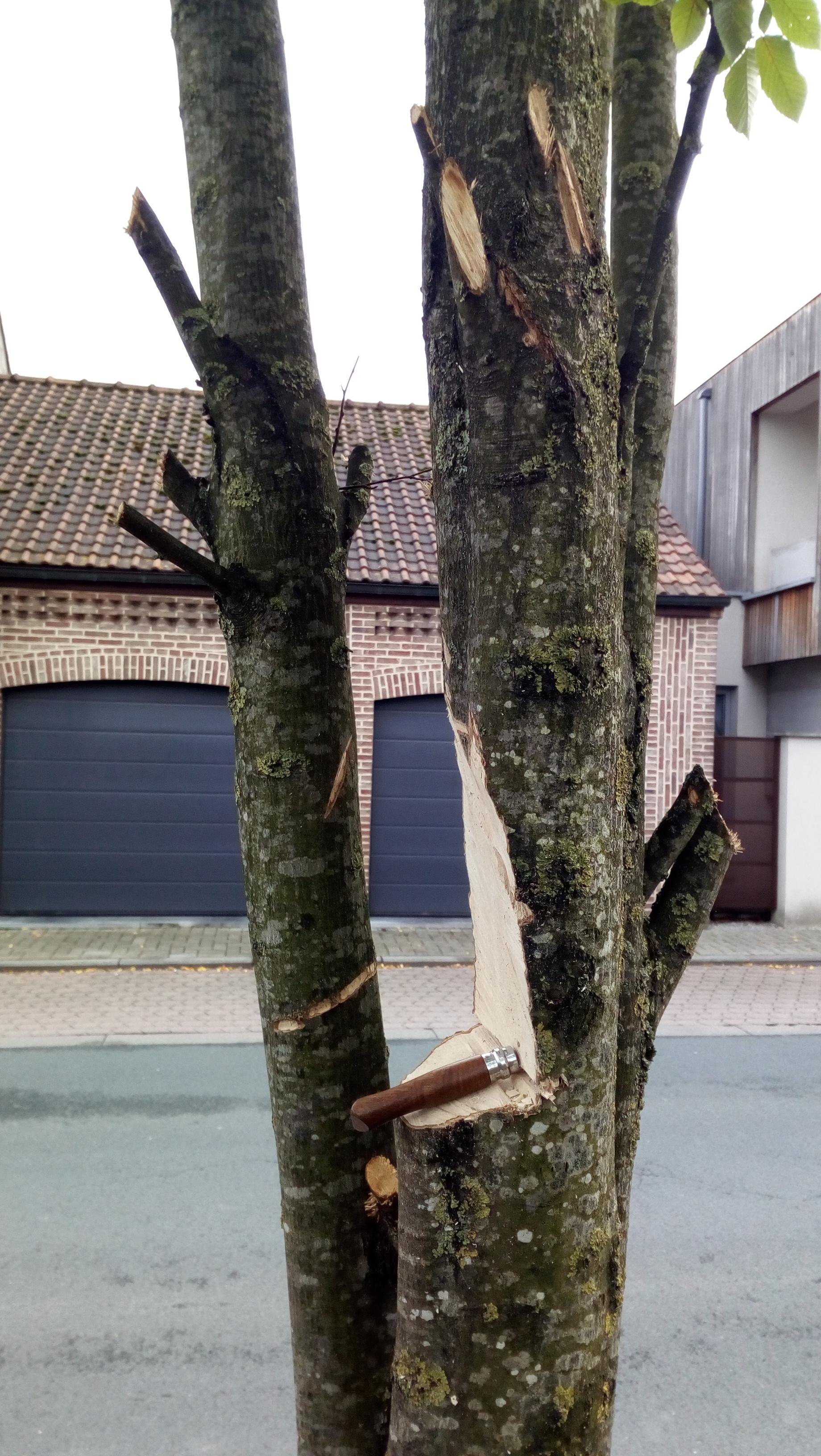 Tentative de taille ou destruction du patrimoine arboré communal