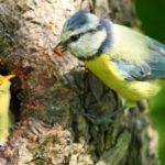 Arbres et nidification : ensemble préservons notre faune