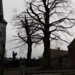 Barème de l'arbre : Un nouvel outil pour connaître la valeur des arbres et mieux les protéger