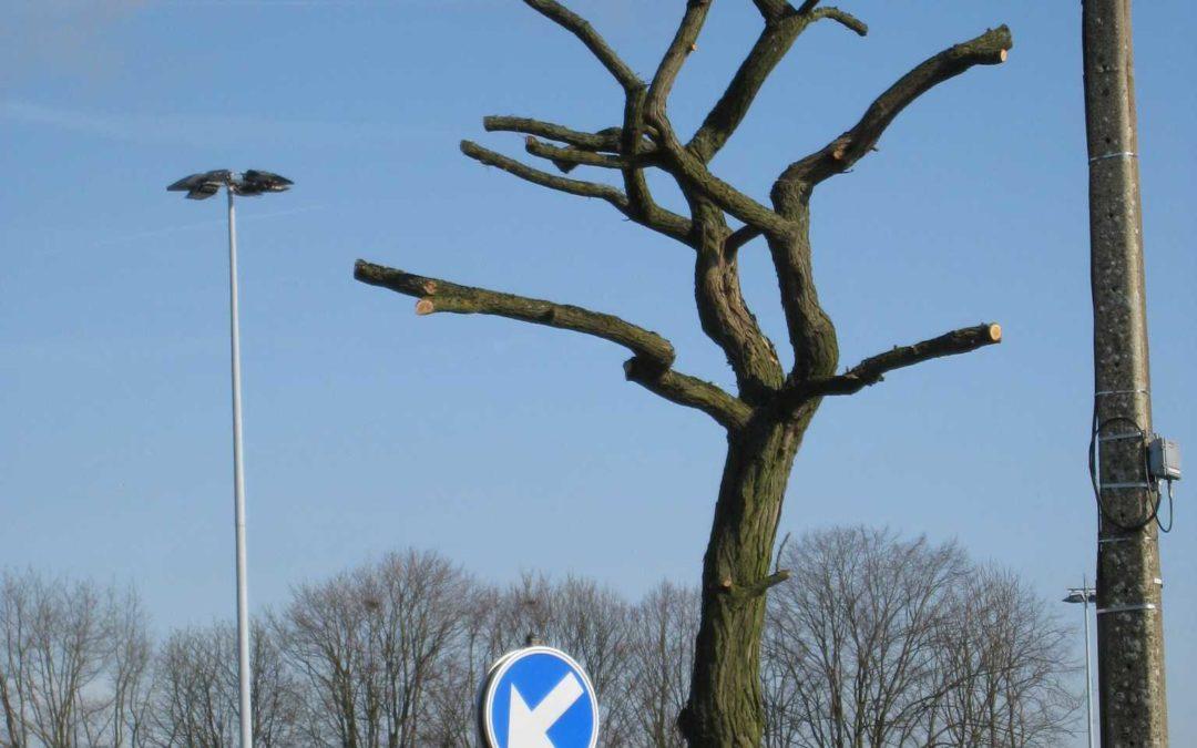 Aux gestionnaires d'arbres urbains