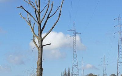 Une raison d'un coût élevé de l'électricité en Belgique